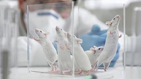 Uusi hiirillä tehty tutkimus näytti hämmästyttävän vähäistä akuuttia myrkyllisyyttä, vaikka testaustavoissa oli vakavia virheitä